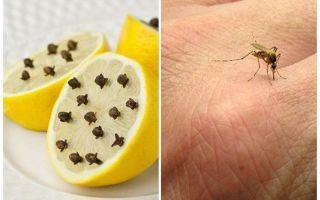 Λεμόνι με σκελίδες κουνουπιών για παιδιά και ενήλικες