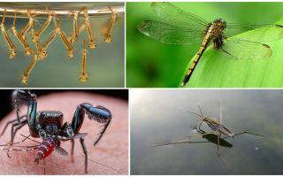 Ποιος τρώει κουνούπια