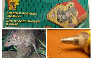 Κόλλα από ποντίκια