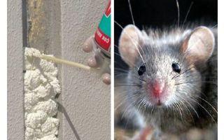 Τα ποντίκια τρώνε αφρό