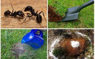 Πώς να απαλλαγείτε από τα μυρμήγκια στα λαϊκά φάρμακα στον κήπο