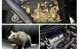 Πώς να βγάλετε τα ποντίκια από το αυτοκίνητο