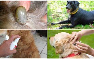 Τα καλύτερα φάρμακα για σκύλους από τσιμπούρια και ψύλλους