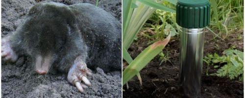 Πώς να απαλλαγείτε από τα σκουλήκια στο καλοκαιρινό εξοχικό σπίτι και τον κήπο