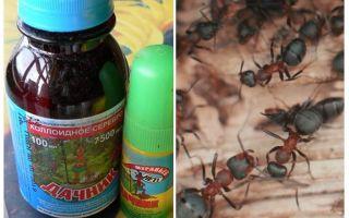 Ο κάτοικος του καλοκαιριού από τα μυρμήγκια