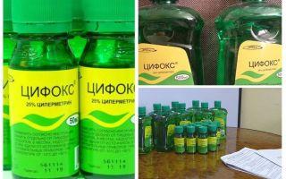 Cyclox θεραπεία για bedbugs