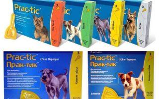 Σταγόνες Πρακτικές από ψύλλους και τσιμπούρια για σκύλους