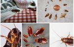 Πώς να αφαιρέσετε μόνιμα τις κατσαρίδες στον ξενώνα