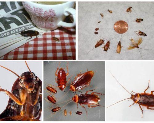 Ονειρεύομαι τις κατσαρίδες όνειρα ό, τι όνειρα για