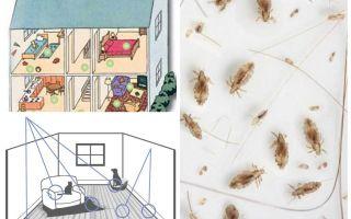 Πώς να απαλλαγείτε από τους οικιακούς ψύλλους