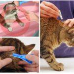 Κανόνες μεταχείρισης των ζώων