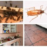 Κατσαρίδες στο σπίτι