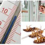 Κρύο ενάντια στις κατσαρίδες
