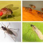 Διατροφικές μύγες και επιστήμονες