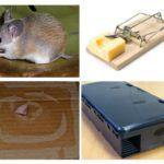 Ποντίκια παγίδες
