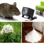 Μέθοδοι αντιμετώπισης ποντικών