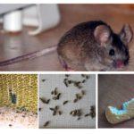Η παρουσία ποντικών στο διαμέρισμα