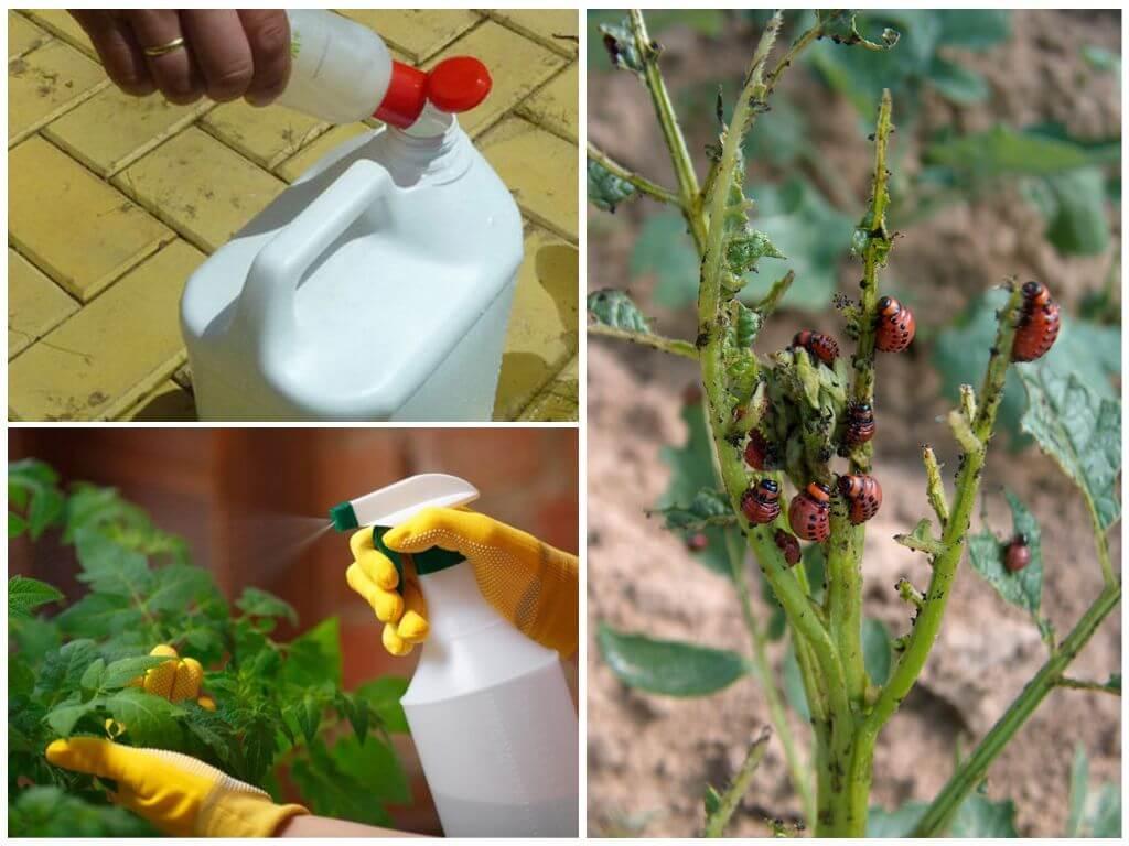 Χημικές ουσίες κατά του σκαθαριού της πατάτας του Κολοράντο