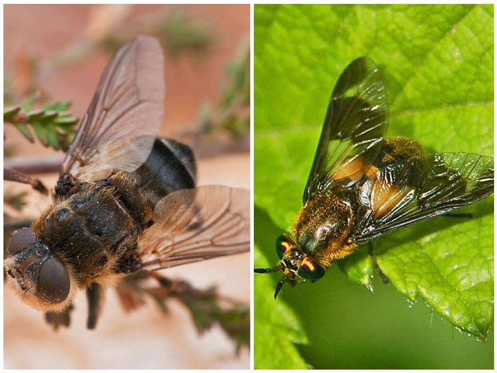 Gadfly και gadfly