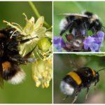 Πολύχρωμα μέλισσα